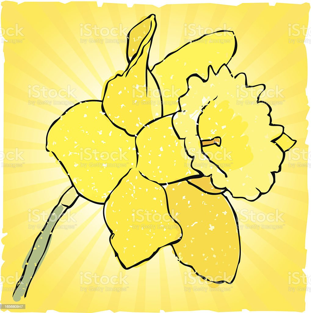 Daffodil royalty-free daffodil stock vector art & more images of celebration event