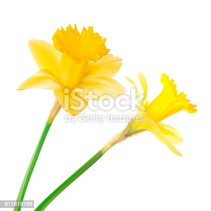 A vector illustration of daffodils.