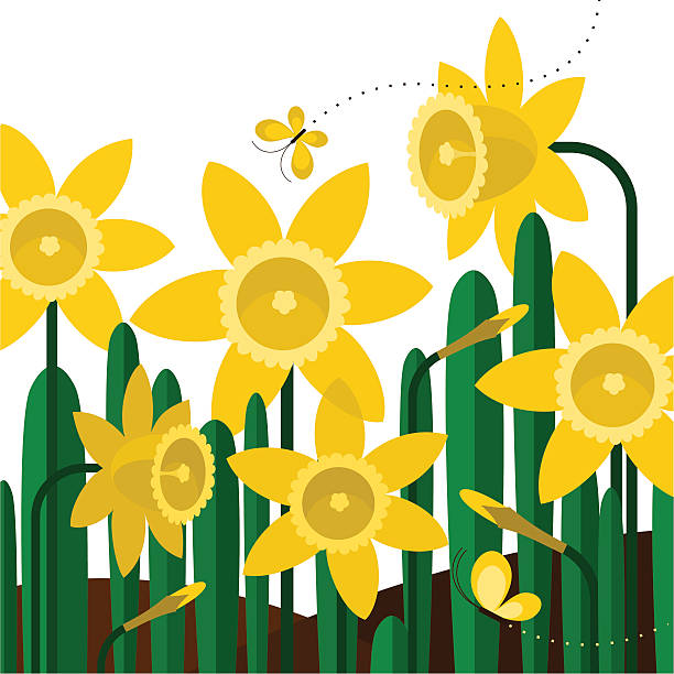 Daffodils butterflies spring flower yellow garden illustration vector Please see some similar pictures in my lightboxs: http://i681.photobucket.com/albums/vv179/myistock/garden.jpg    daffodil stock illustrations