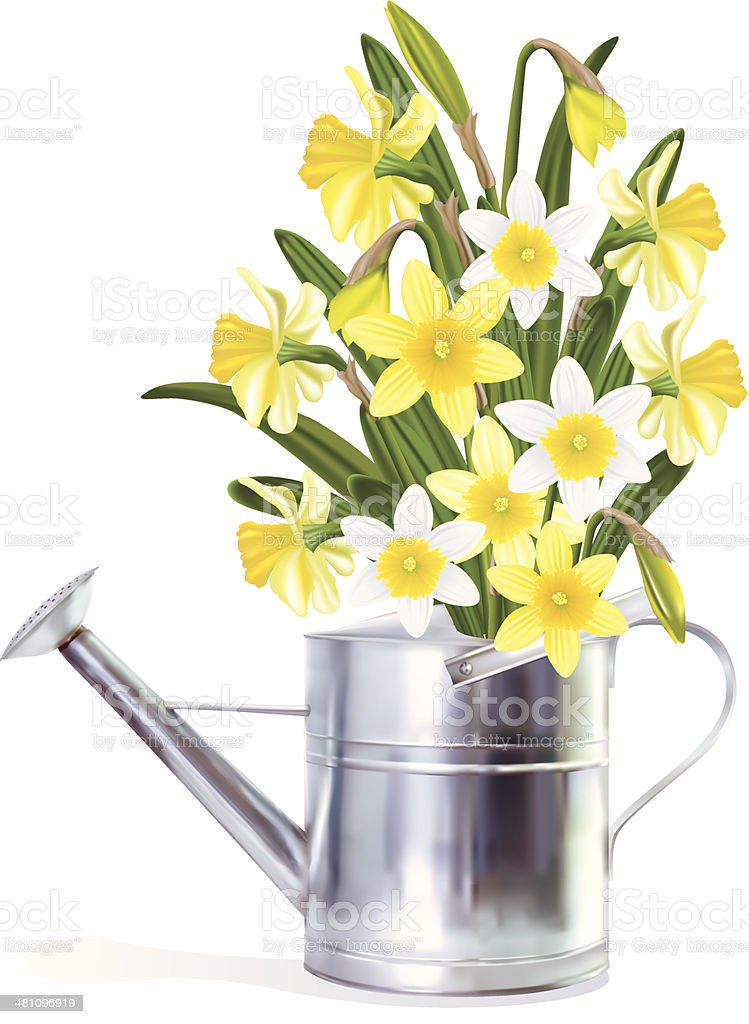 Daffodils In A Watering Can vector art illustration