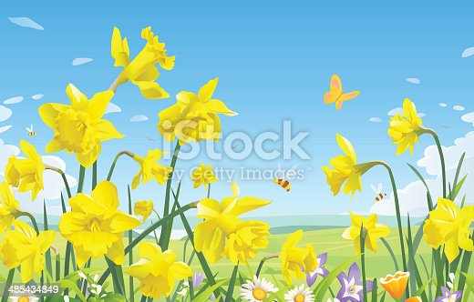 A meadow full of daffodils, bees and butterflies and blue sky in the background. EPS 8, fully editable, grouped and labeled in layers.