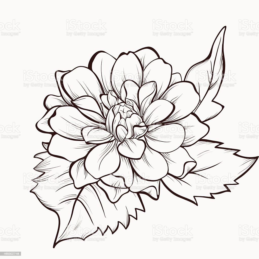 Dahlia Flower Hand Drawin Vector Flower Stock Vector Art More