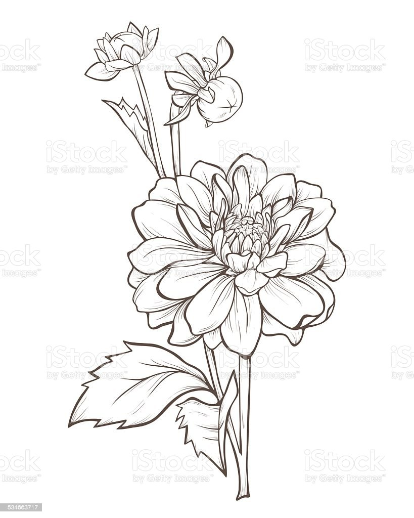Dahlia flower stock vector art more images of 2015 534663717 istock dahlia flower royalty free dahlia flower stock vector art amp more images of izmirmasajfo Gallery