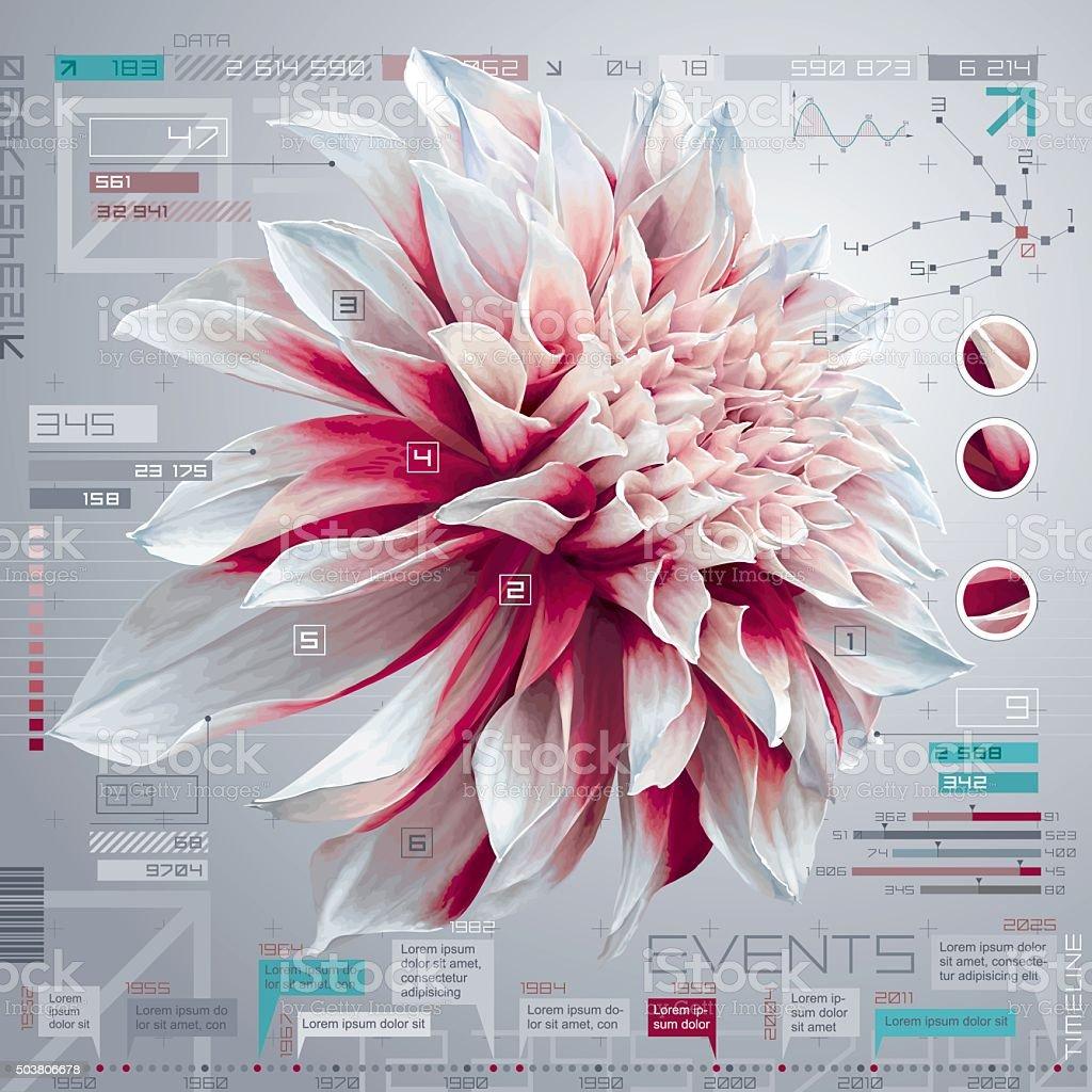 Dahlia infographic set vector art illustration