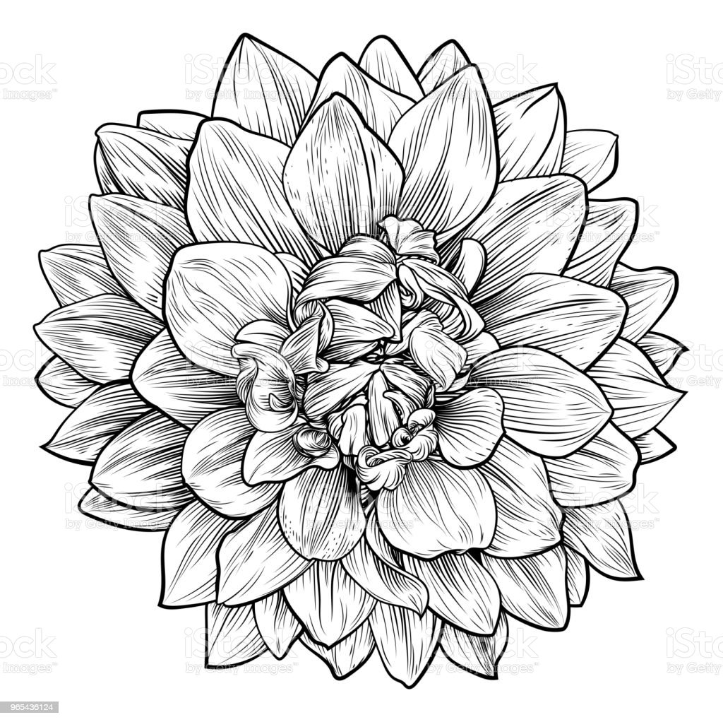Dahlia or Chrysanthemum Flower Woodcut Etching royalty-free dahlia or chrysanthemum flower woodcut etching stock vector art & more images of abstract