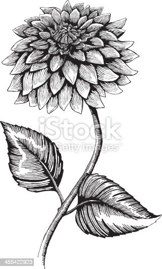 Dahlia, Ink Style - vector drawing