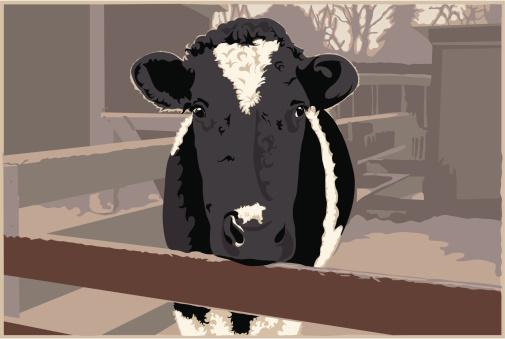 Dairy Cow on a Farm