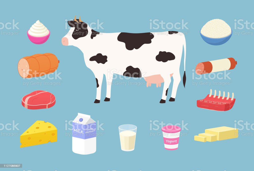 Dairy products and meat products from cows. Set of butter, yogurt,...