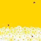 White Daisies and Ladybugs on yellow background with frame. Vector. EPS 8.