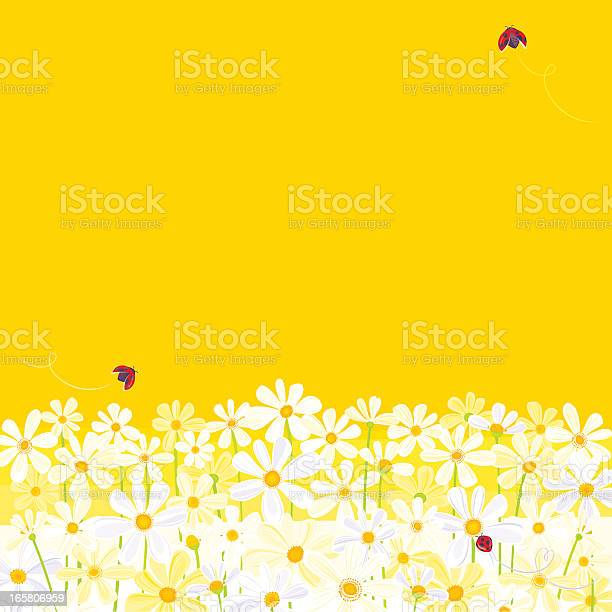 Daisies against yellow background with flying ladybugs vector id165806959?b=1&k=6&m=165806959&s=612x612&h=0jdlpged nn77k6m xh2figm qqhms7mvgzuyc2u3oi=