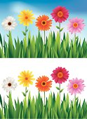 Illustration of beautiful Daisies floral Background, all elements are individual objects, used simple gradient colors, No transparencies. Hi res jpeg included. User can edit easily, Please view my profile.