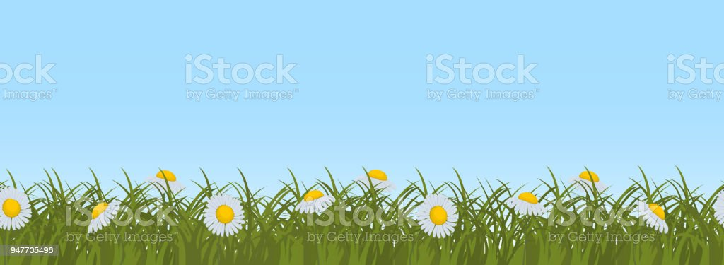 grass and sky backgrounds. Simple And Daisies In Green Grass On A Blue Sky Background Seamless Border  Royaltyfree Daisies And Grass Sky Backgrounds
