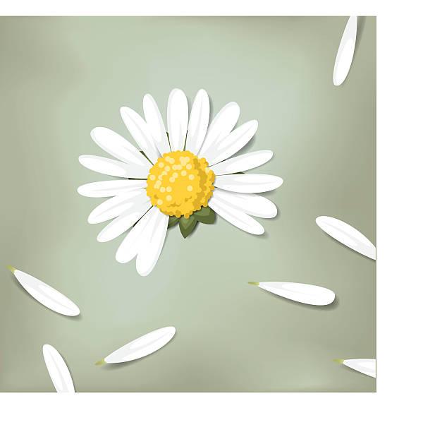 illustrazioni stock, clip art, cartoni animati e icone di tendenza di fiore di margherita e petali (mi ama, mi ama non) - raccogliere frutta