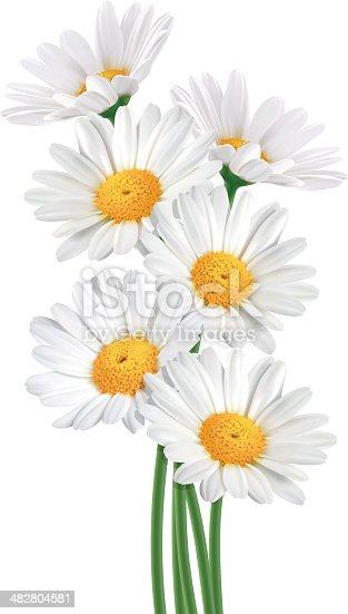 istock Daisy Bouquet (Vector) 482804581