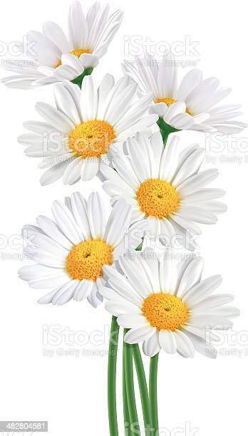 Daisy bouquet vector id482804581?b=1&k=6&m=482804581&s=612x612&h=v7tg4fbay6txsgsery0qn50s73gxfb9nzkmtm1ybsoq=