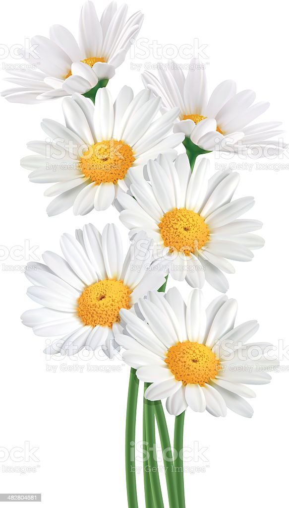 Daisy Bouquet (Vector) vector art illustration