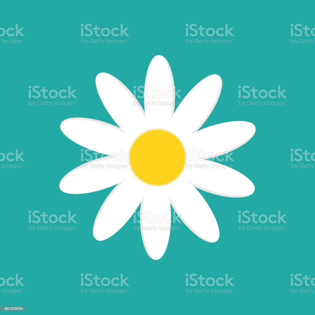 Daisy chamomile isolated on white background. Vector illustration.