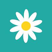 Daisy chamomile isolated on white background. Vector illustration. Eps 10.