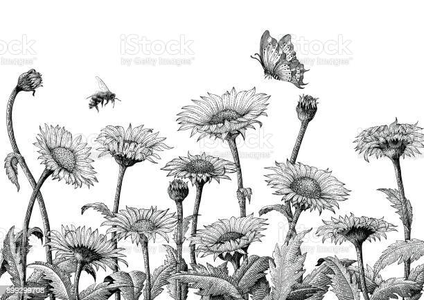Daisy field hand drawing engraving illustration isolated on white vector id899299708?b=1&k=6&m=899299708&s=612x612&h=qd4rrz9nywhtcj7o10m3wcwnuszldhr7fly9yw2hlfa=