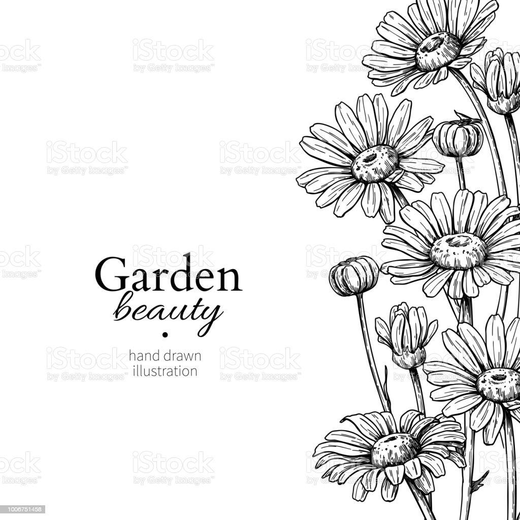 Daisy flower border drawing vector hand drawn engraved floral frame daisy flower border drawing vector hand drawn engraved floral frame chamomile royalty free izmirmasajfo