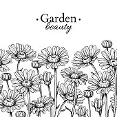 Daisy flower border drawing. Vector hand drawn engraved floral seamless pattern. Chamomile black