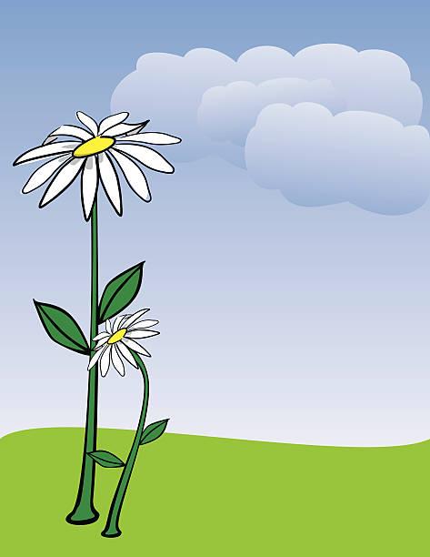 Daisy Flower Note paper vector art illustration