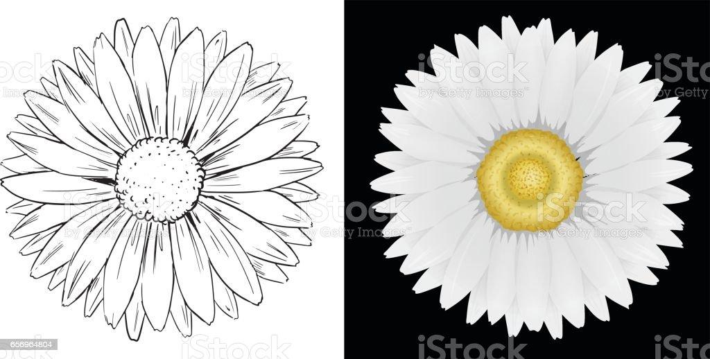 Fleur De Marguerite Sur Fond Blanc Et Noir Cliparts Vectoriels Et
