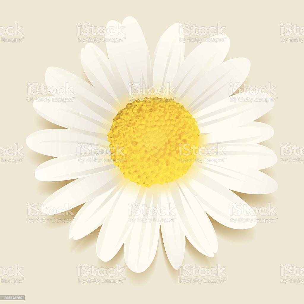 Daisy flower vector art illustration