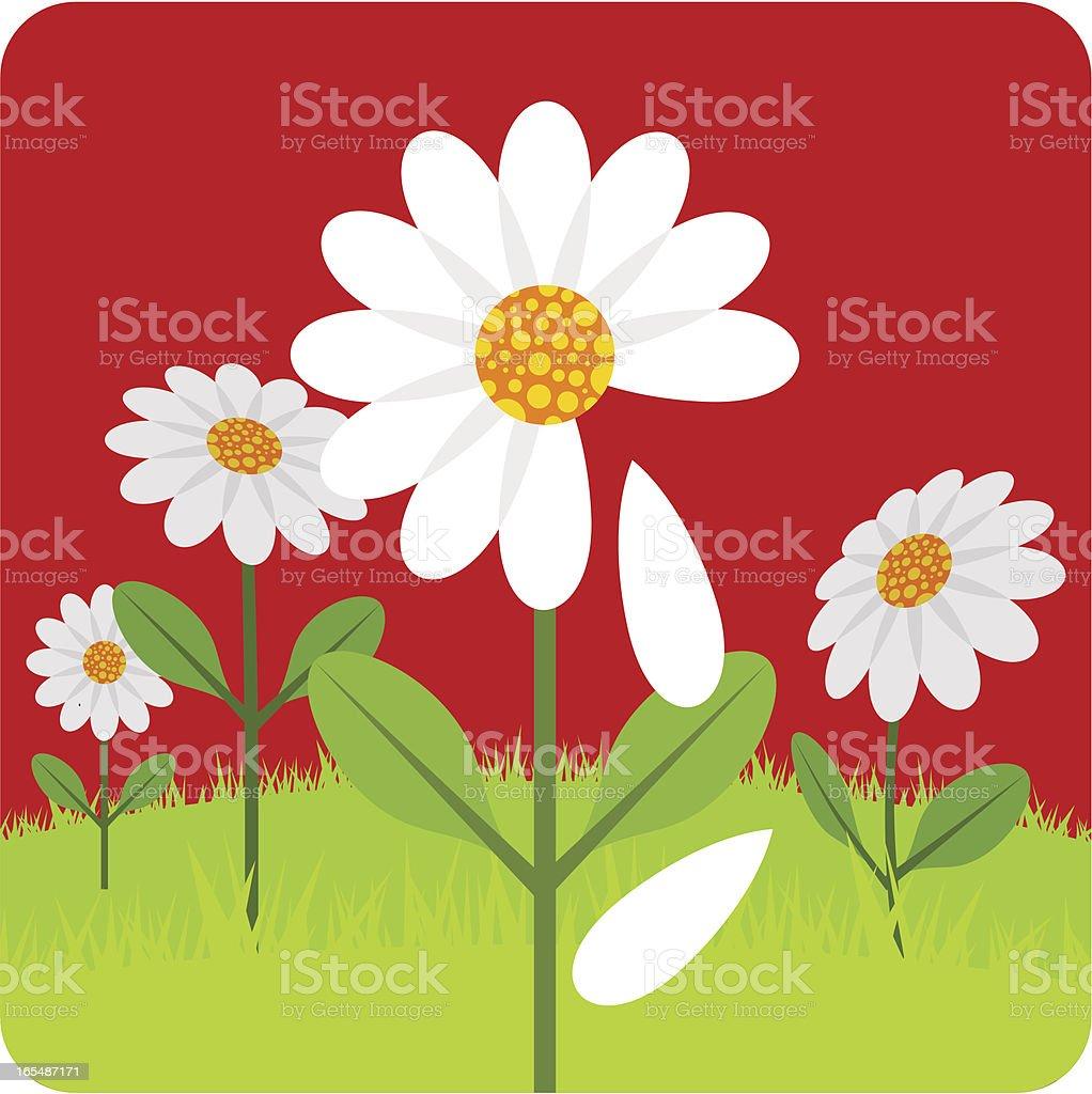 Daisy love flower illustration vector royalty-free stock vector art