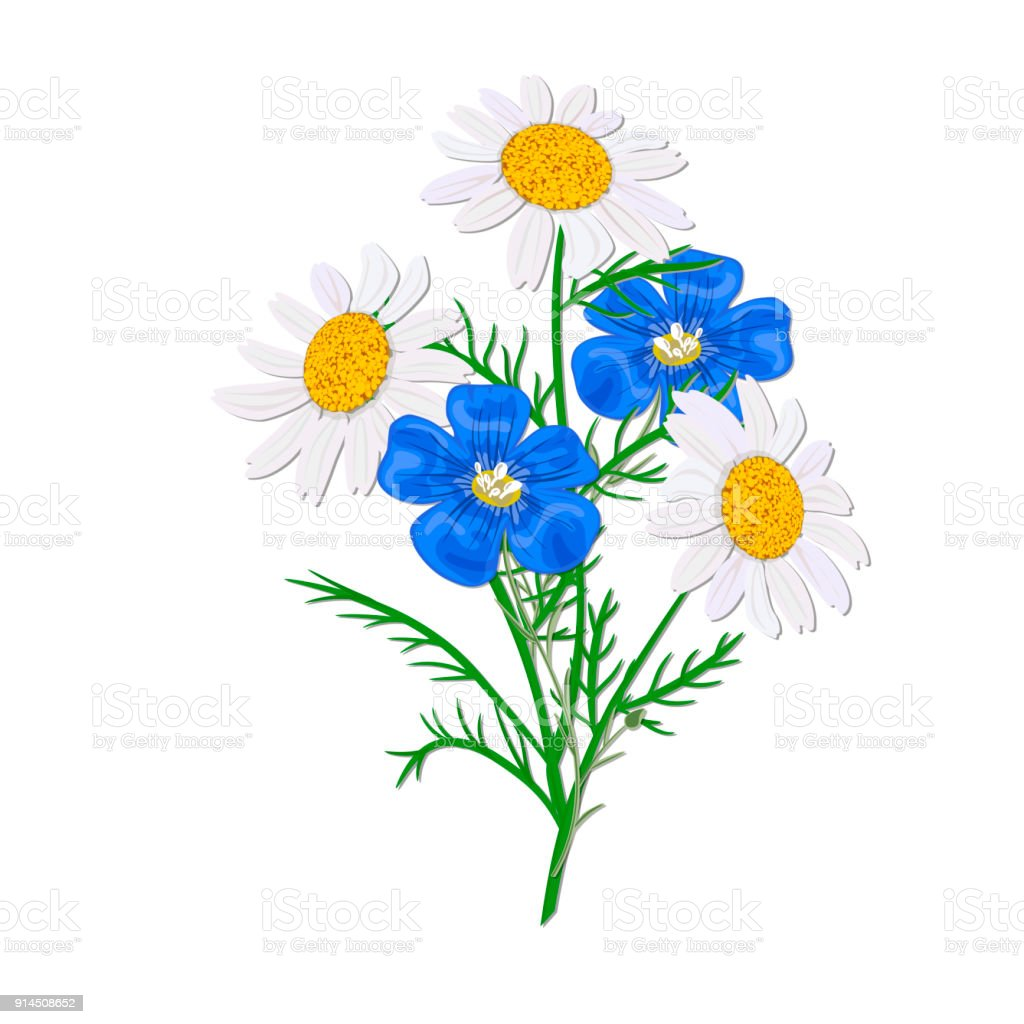 Daisy Or Chamomile Wildflower Isolated With Stem Flax Forgetmenot ...