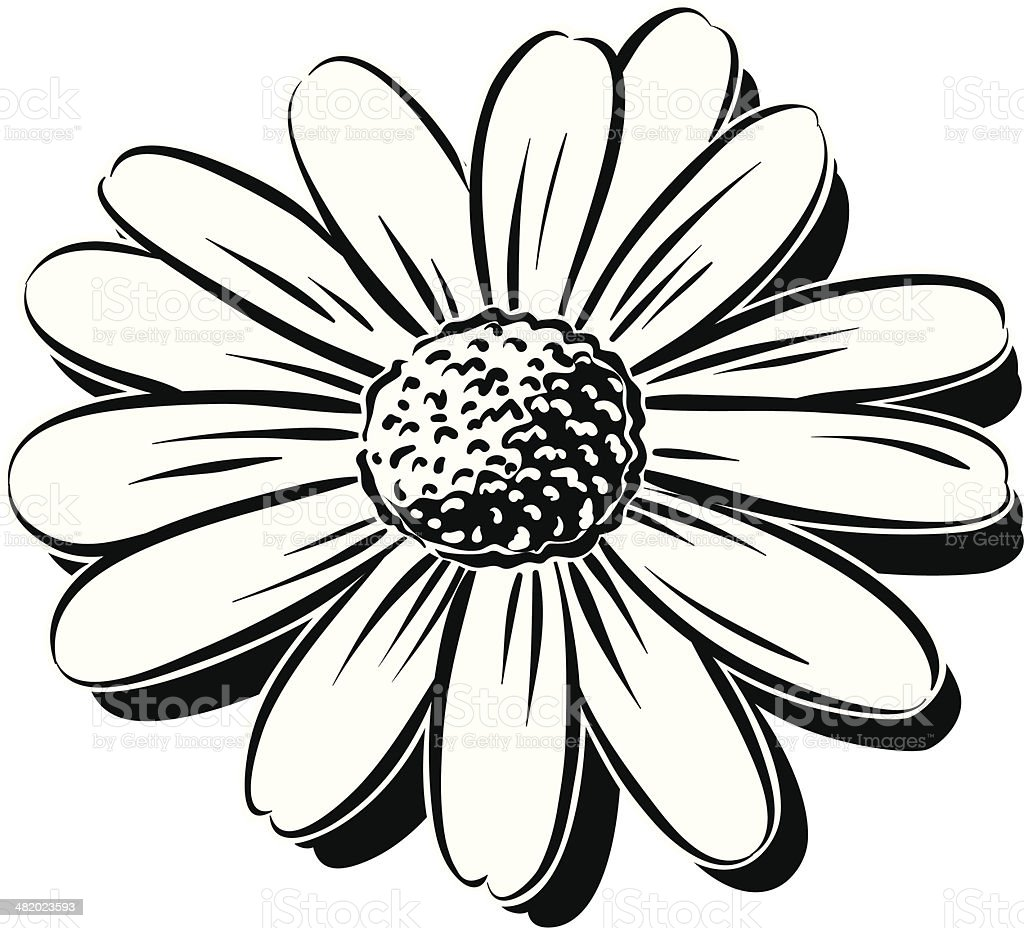 daisy vector art illustration