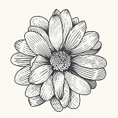 Vector illustration od daisy organized with layers and global colors.