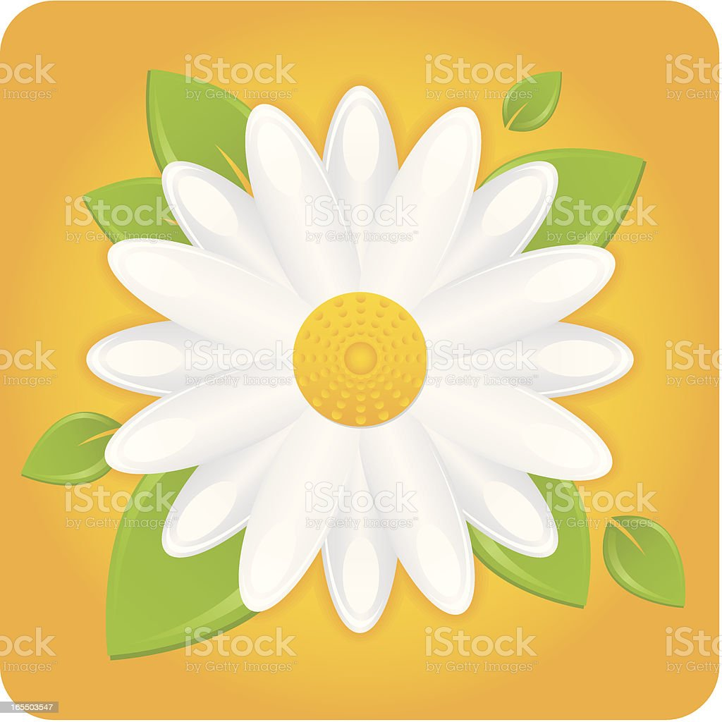 Daisy with Leaves royalty-free stock vector art