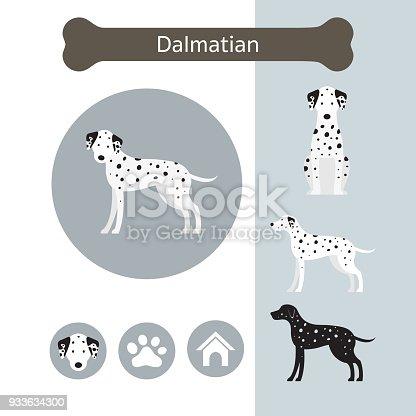 istock Dalmatian Dog Breed Infographic 933634300