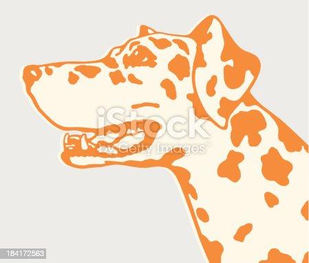 istock Dalmatian Dog 184172563