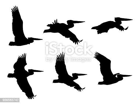 Dalmatian pelican (Pelecanus crispus) in flight silhouettes set