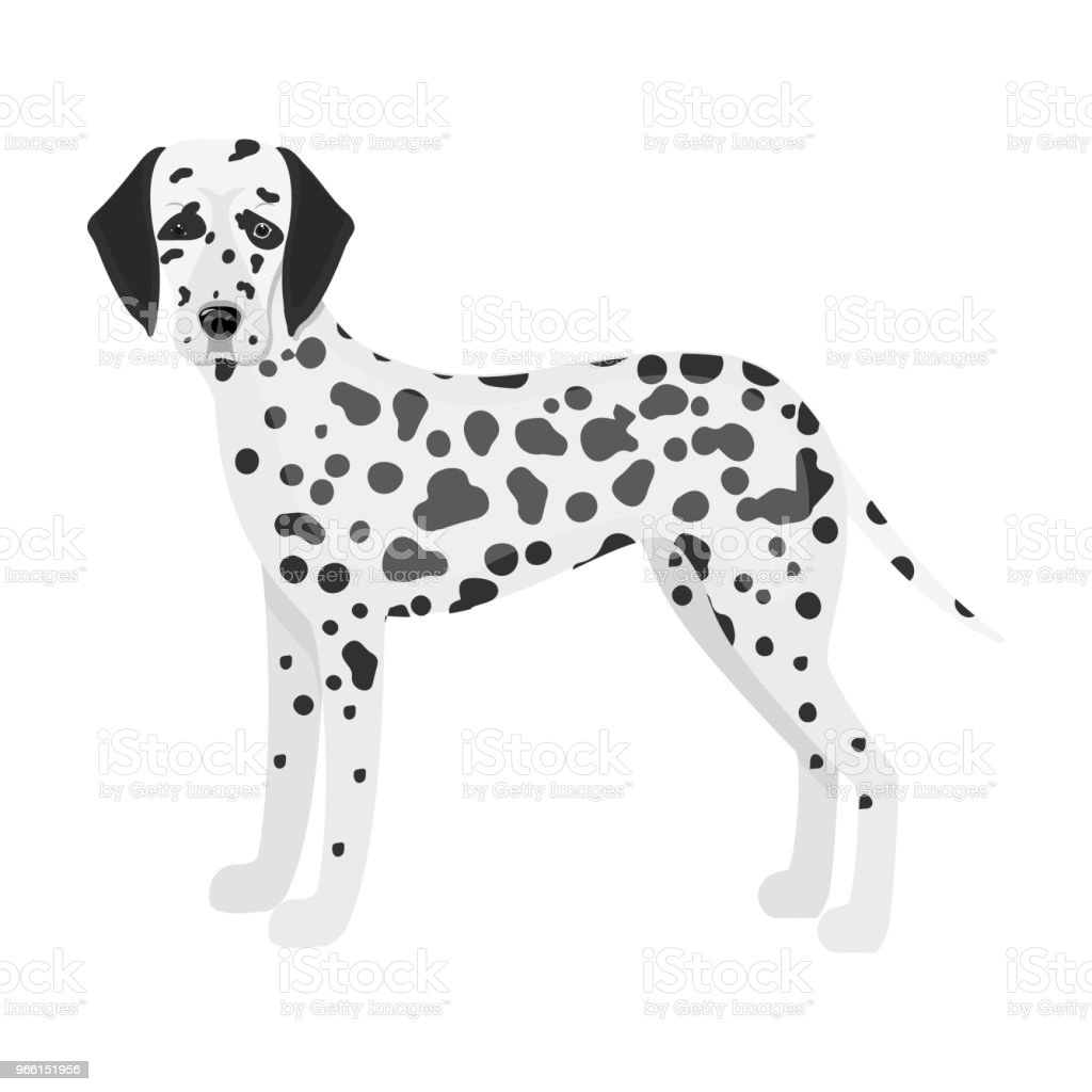 Dalmatian, single icon in monochrome style.Dalmatian vector symbol stock illustration web. - Векторная графика Векторная графика роялти-фри