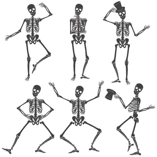Menschliches Skelett Vektorgrafiken und Illustrationen - iStock