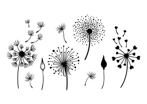 Dandelion black and white clipart bundle, elegant summer wild flowers set, botanical floral isolated elements, meadow flowers vector illustration