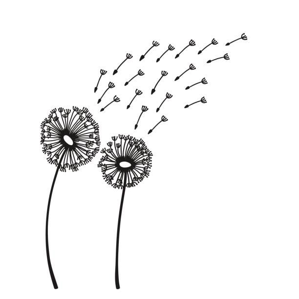 Dandelion blowing silhouette vector art illustration