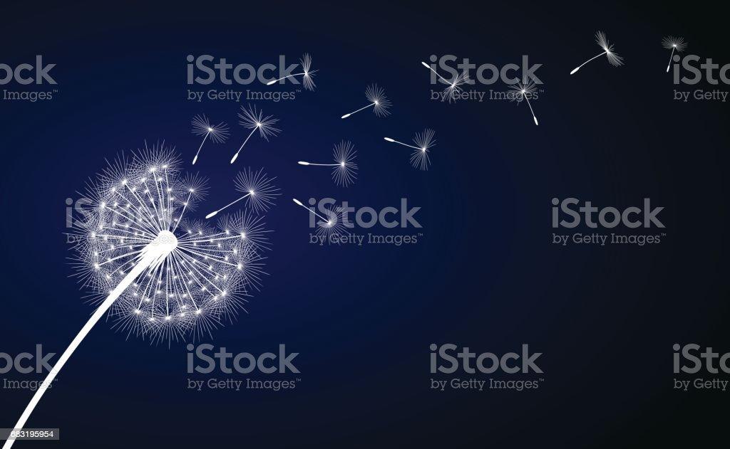 Dandelion flower and seeds 免版稅 dandelion flower and seeds 向量插圖及更多 側影 圖片