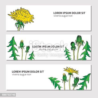 istock Flor de amapola, cogollos, hojas ilustración de dibujado a mano ...