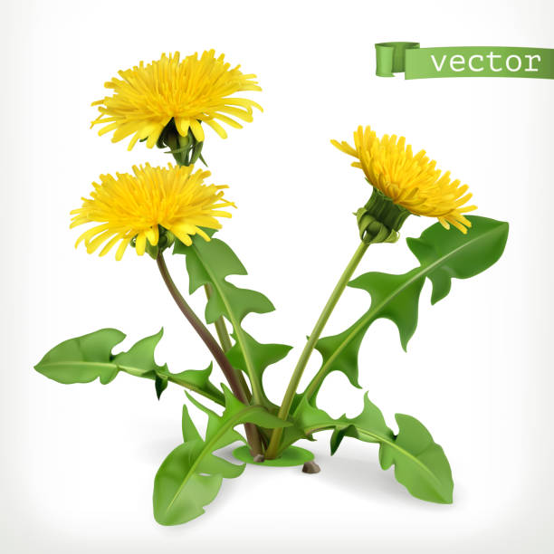 stockillustraties, clipart, cartoons en iconen met paardebloem bloemen, 3d-vector pictogram - paardenbloem