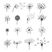 Dandelion Fluffy Flower and Seeds Set. Vector