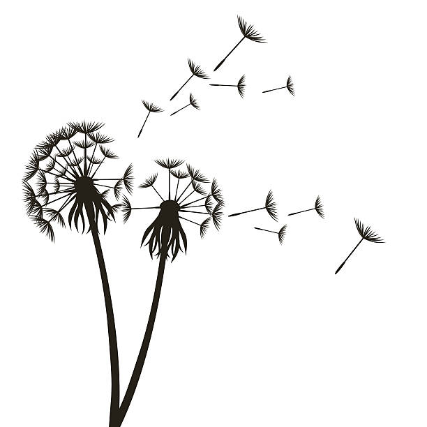 stockillustraties, clipart, cartoons en iconen met dandelion fluffy flower and seeds. vector - paardebloemzaad
