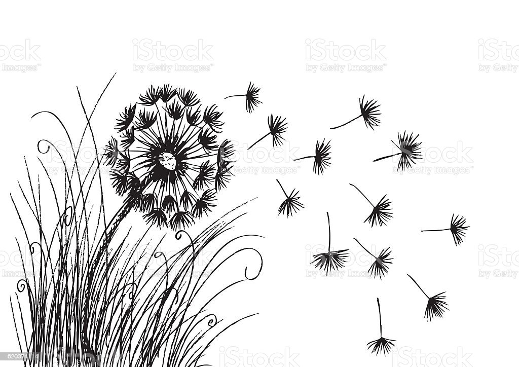 Dandelion. Hand drawing illustration. dandelion hand drawing illustration - arte vetorial de stock e mais imagens de dente-de-leão royalty-free