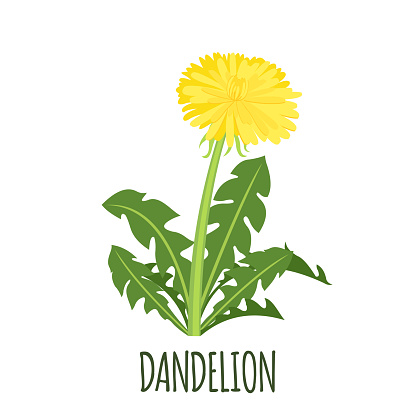 Dandelion icon in flat style isolated on white.