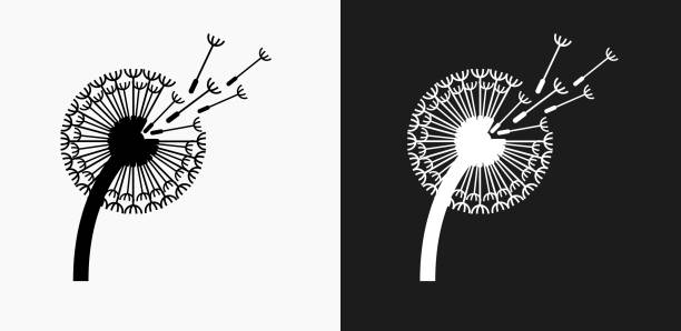 Dandelion Icon on Black and White Vector Backgrounds vector art illustration