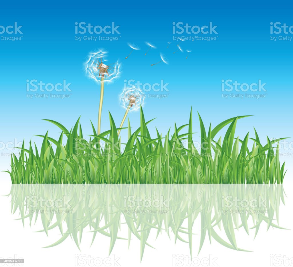 Dandelion in grass vector art illustration