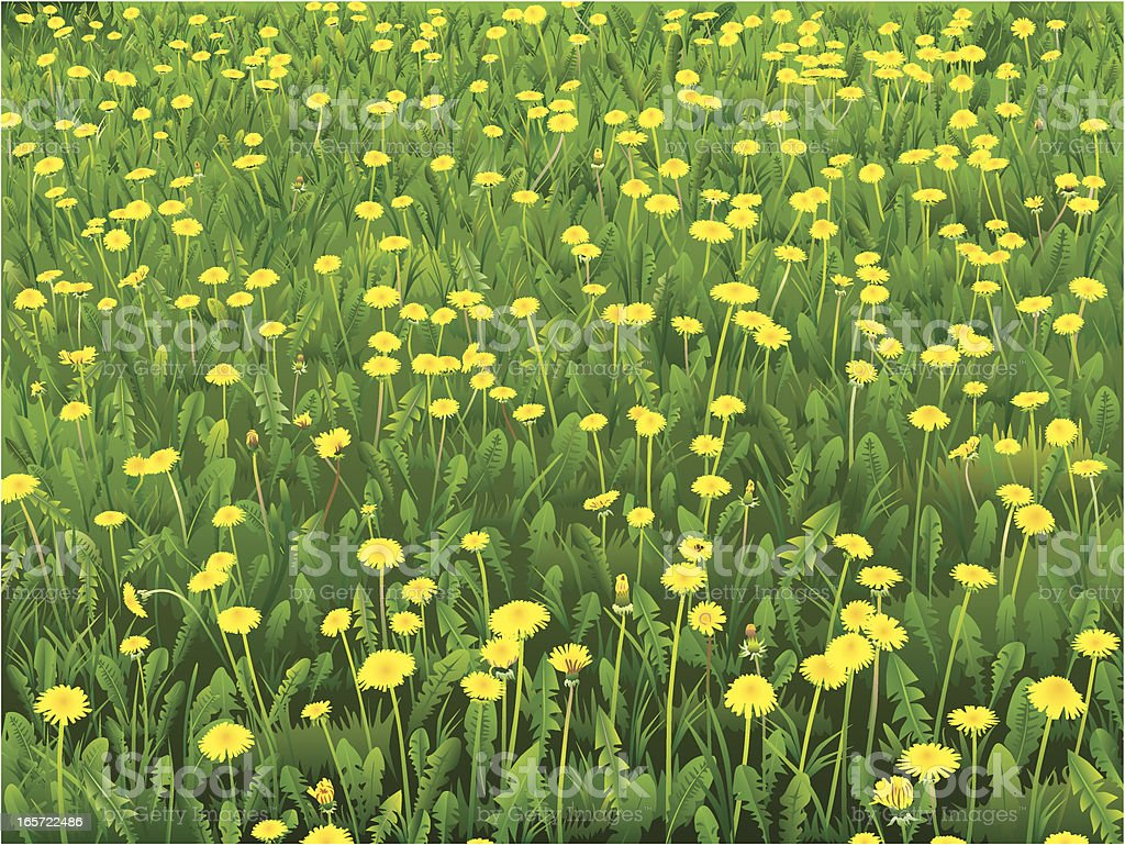 Dandelion meadow royalty-free stock vector art